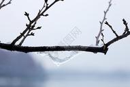 大雪后树枝图片