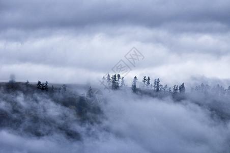新疆禾木山间云雾森林水墨画图片