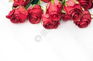 情人节的玫瑰花图片