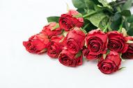 情人节的玫瑰花500790905图片
