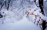 冬天被大雪覆盖的森林中的小路图片