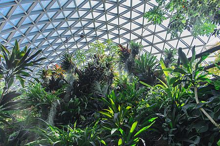 上海辰山植物园热带植物温室图片