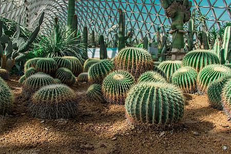 上海辰山植物园沙漠园图片