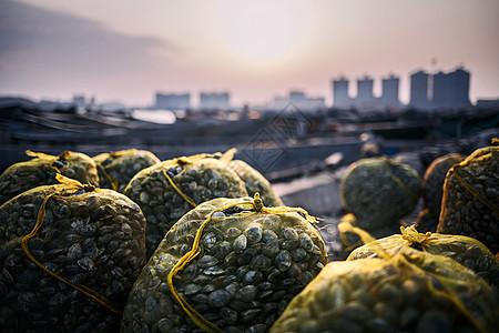 海边湿地新鲜捕捞上来的贝壳图片