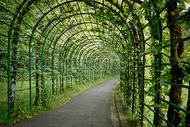 绿色田园风格走道图片
