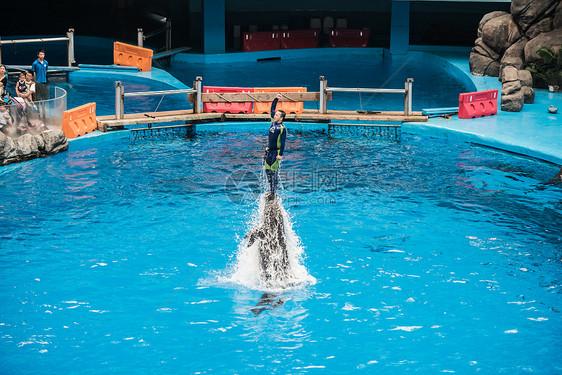 海豚顶着训练员冲出水面图片