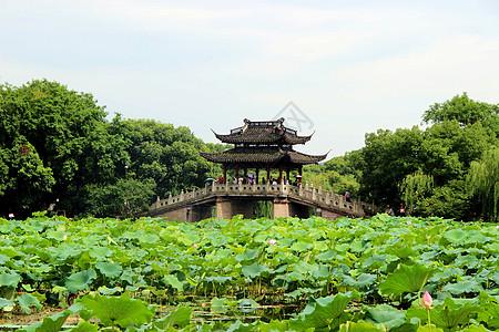 杭州西湖曲院风荷图片