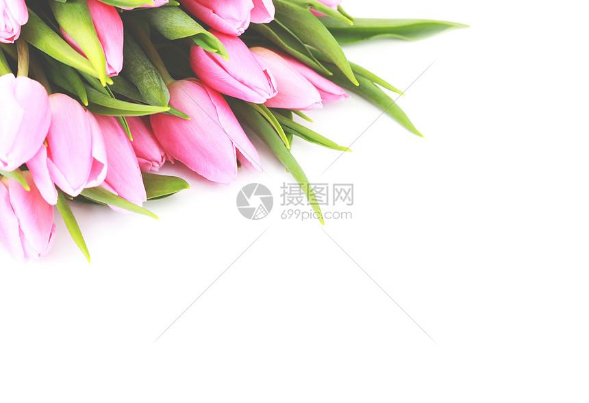 浪漫百合花背景图片