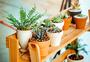 绿色盆栽植物图片
