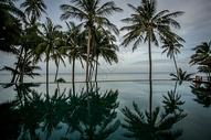 泰国椰树图片