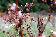 秋天枯萎植物图片