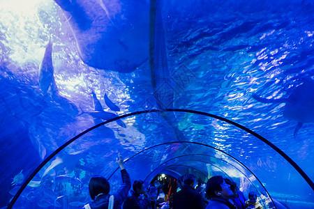 水族馆海底世界图片