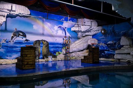 海洋馆驯海狮表演图片