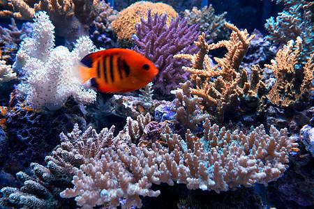 海洋公园热带鱼图片