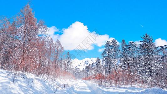 东北雪图片