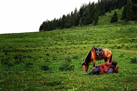 新疆赛里木湖草原的马图片