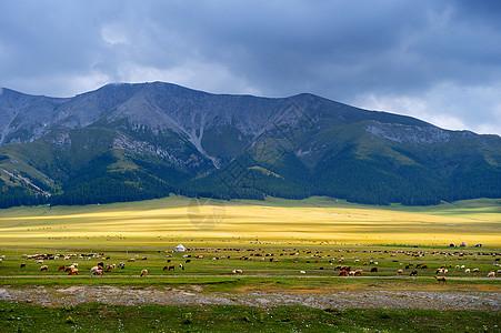 新疆赛里木湖草原羊群图片