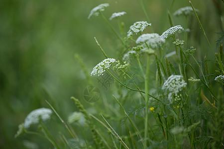 自然之美荒野小花图片