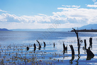 大理海舌湿地公园500807834图片