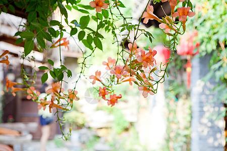 假日古镇鲜花图片
