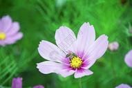 花很美图片