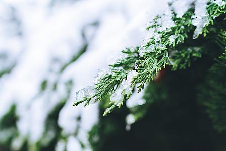 被白雪覆盖的绿色植物图片