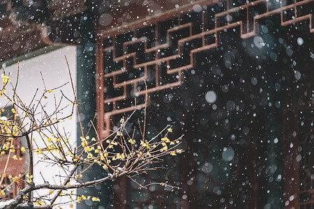 中式古典园林中的雪景图片
