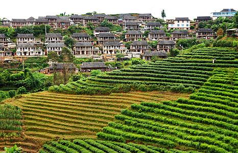 西双版纳茶山图片