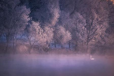 梦幻天鹅湖图片