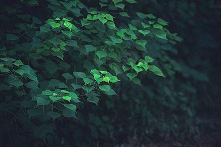 绿色氧吧图片