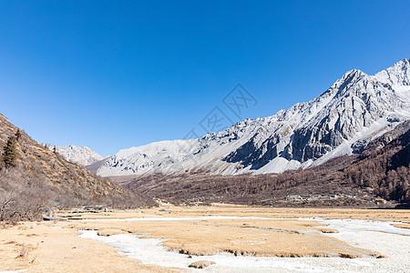 冬天的稻城亚丁洛绒牛场图片