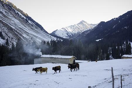 新疆特克斯琼库什台雪山牧民图片