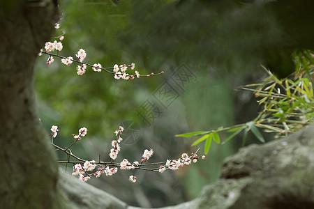 石洞外的梅花图图片