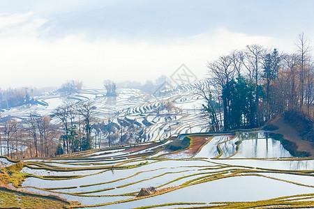 云南元阳梯田晨雾图片