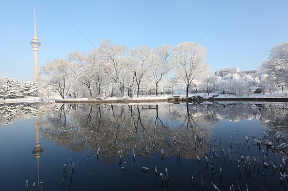 回忆北京的雪图片