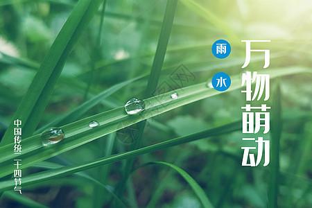 二十四节气雨水图片