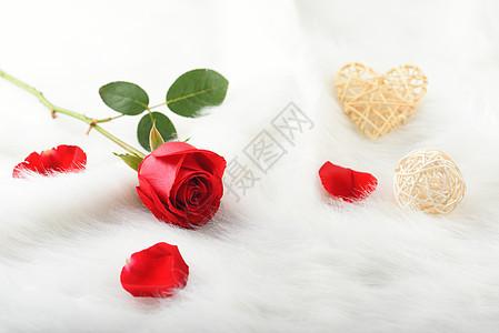 绒毛上鲜红的玫瑰花图片