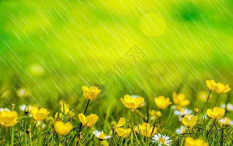 春天的雨水图片