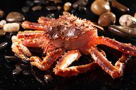 帝王蟹 图片
