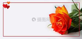 情人节玫瑰图片