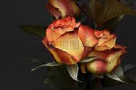 情人节玫瑰500818975图片