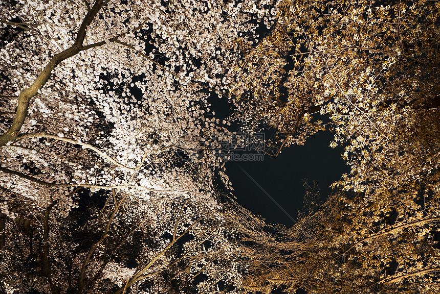 日本夜樱图片