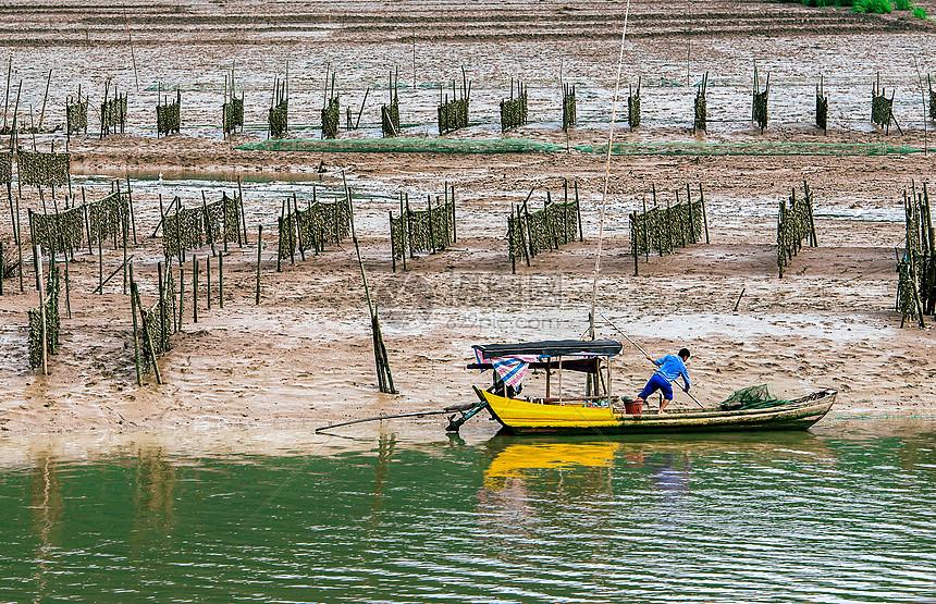 渔民与牡蛎养殖图片