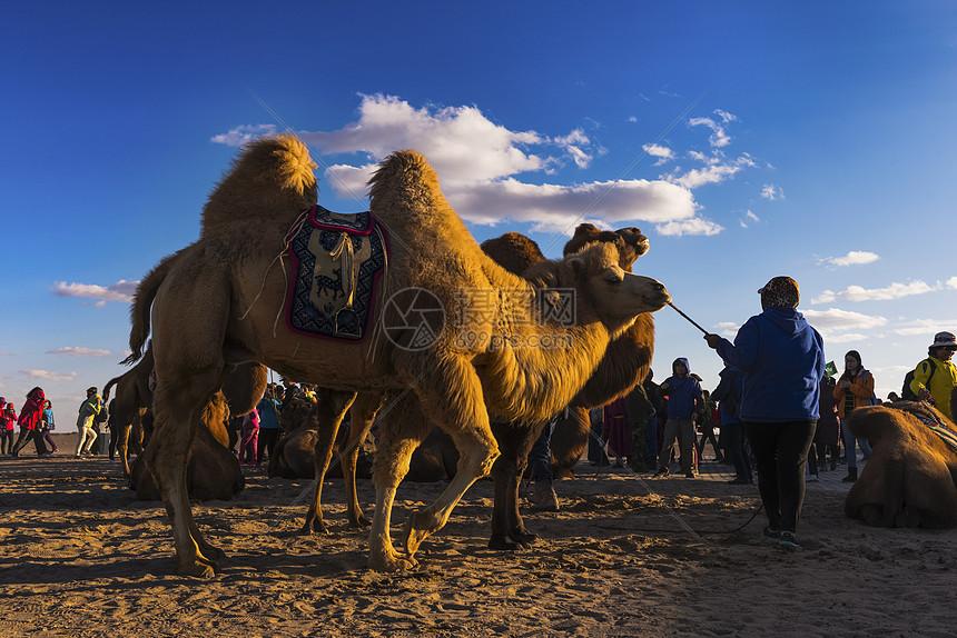 骆驼祥子图片