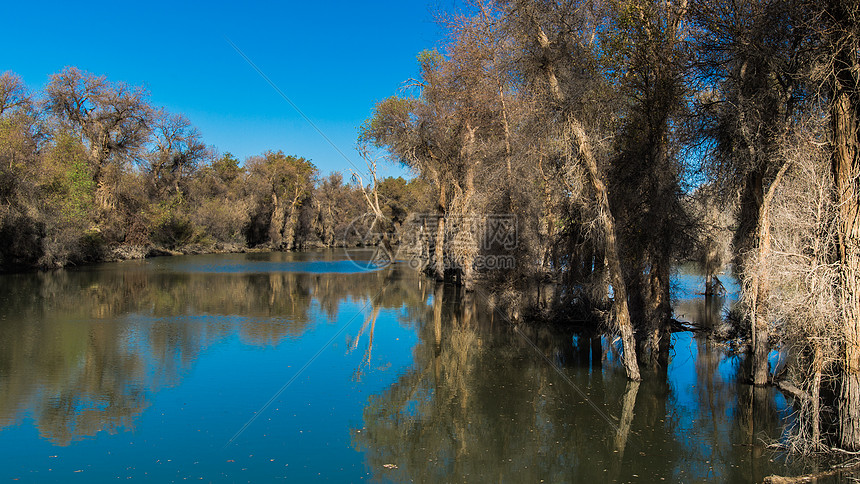 新疆塔里木胡杨林公园图片