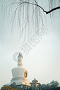 瘦西湖的垂柳图片