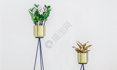 家具植物摆设图片