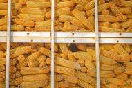 玉米仓库图片