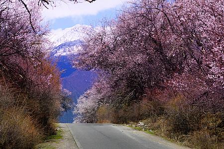 西藏林芝桃花公路图片