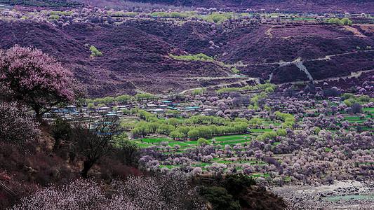 西藏林芝桃花沟图片
